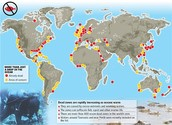 What kinds of geographic areas are affected by dead zones?