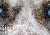 Animals Can Have PTSD As Well