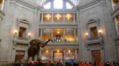 El museo de Natural Historia