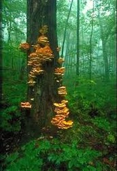Fungi - 6000 IQ