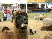 Come see our petting zoo!