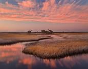 Salt Marsh Florida