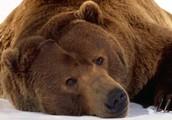 Is It Okay To Eat Wild Animals: