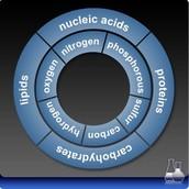 Four Types Of Macromolecules