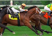 Horse Raceing