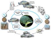Perch Life Cycle