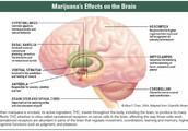 Effects Marijuana give you: