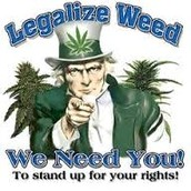 Goverment Wants Weed Legalized
