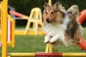 GarryOwen Producers - Dog Club Leader Search!