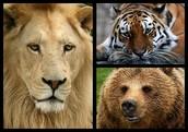 Visiten el Philadelphia zoo y miren el animales!