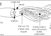 Body Structure and Appearance
