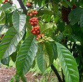 La Planta Cafeteo