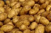 40 - tons of potatoes.