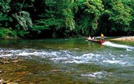 Brunei Rainforest