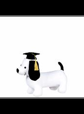 Graduation Husky dogs