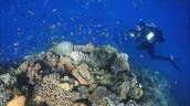 Great Barrier Reef Underwater