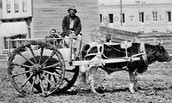 Another picture of a Red river cart with a guy and an ox.