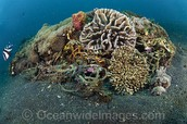 Small coral reef