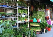 Beanstalk Greenhouse has the best products!