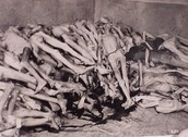 Dead body in a concentration camp