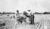 Southern Planter