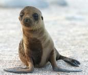 fauna de la costa