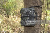 (Camera traps used to view animals)