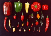 Variation in chiles