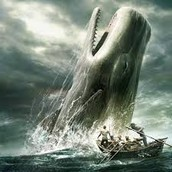Shows how big the whale is