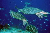 Sea Turtles!!!