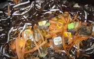 FEED COMPOST WORMS YOUR SCRAPS