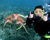Scub Diving