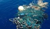 trapping marine mammals