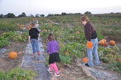 Picking out our pumpkins