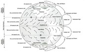 Wind diagram