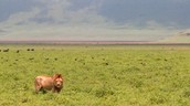 Serengeti Plains in Africa