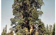 state tree