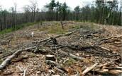 110,000 trees cut down