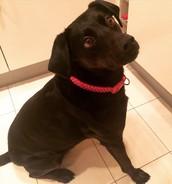 Kara  (Johns dog)