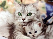 Cats have adorable babies!