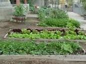 Cooking & Gardening