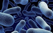 Bacteria's bad effects on your body