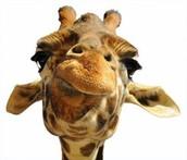 Una jirafa para tí