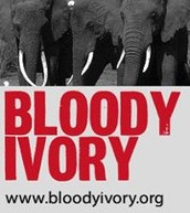 What is Bloody Ivory?