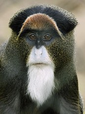 Habitat the distribution for the  Monkey covers may regions around the world.  They tend to live in forest regions.