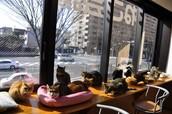 CATS!CATS!CATS!