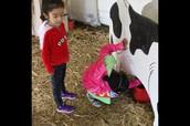 Farm Chores:  Milking the Cow
