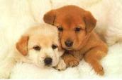 כלבים חמודים