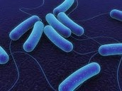 Facts about this bacteria.