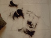 My hair that's shedding and falling out